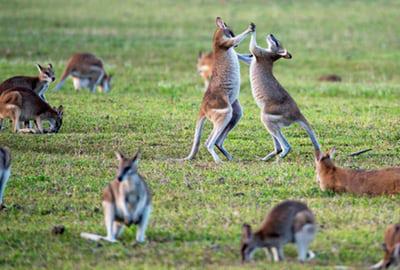 澳大利旅游